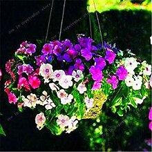 SANHOC 100 PC Periwinkle Bonsai Blumen Mix Vinca