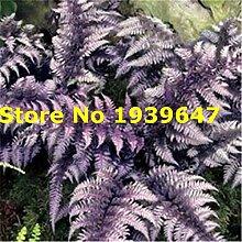 SANHOC 200pcs Mehrfarben Fern Pflanzen Chilean