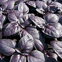 SANHOC Samen-Paket: Basilikum, RED Rubin,