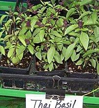 SANHOC Samen-Paket: Basilikum, Thai-Basilikum,