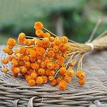 Sansund Blumen, 50 Stiele, getrocknete Blumen für