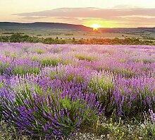 Scenolia Fototapete Aube EN Provence 3x2,70m Deko