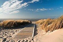 Scenolia Fototapete CHEMIN des Dunes 3x2,70m Deko