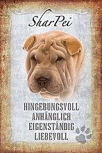 Schatzmix Hunde steckbrief: Shar Pei -