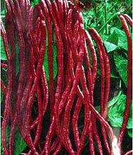 Schlussverkauf!!! 20 Samen rote Bohnen Samen für