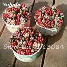Schlussverkauf! 50 PC Seltene Kakteensamen Sukkulenten Mini Garten Pflanzen, Edible Beauty Obst Vegeable Samen Kräuter Gesunde Pflanze 16