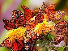 Schmetterling Bunt Diamant Malerei 5D DIY Pflanze