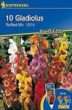 Schmetterlings-Gladiole Ruffled |