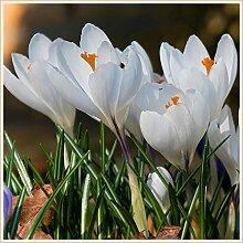 Schöne einheimische Blumen,Leicht zu
