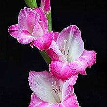 Schöne Gartenerde Kulturpflanzen,Magische