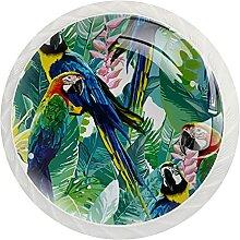 Schrankknöpfe, tropische Papageien, rund,