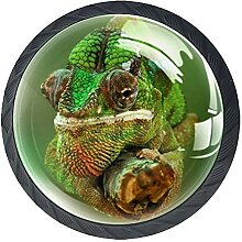 Schubladenknöpfe Chamäleon Reptilien Eidechse