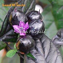 Schwarzer Pfeffer Hot Chili-Samen, 20 Samen, rosa Blume Pflanze Gemüsesamen Bonsai einfach zu Hause Garten wachsen für