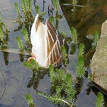 Schwimmtier halbe Ente