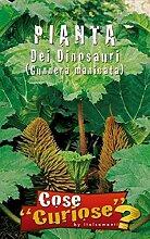 ScoutSeed GUNNERA MANICATA Pflanze der Dinosaurier