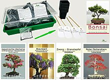 Seedeo Bonsai Anzuchtset deluxe Best of (Roter