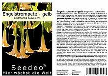 Seedeo® Engelstrompete gelb - Brugmansia