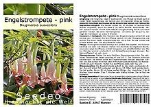 Seedeo® Engelstrompete pink - Brugmansia
