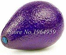 seedsown . 10 PC mischten Avocado Samen Köstliche
