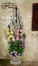 seedsown 100 Stück Rare Kletterrose Blumensamen