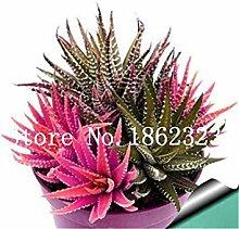 seedsown . 100Pcs Sukkulente Pflanzen Aloe Samen,
