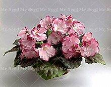 seedsown 50Pcs Schöne Pflanze Bonsai Blumensamen
