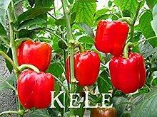 seedsown Hot verkaufen100pcs Red Paprika Samen,