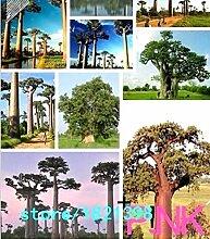 seedsown Keimfutter: 100 Adansonia Digitata Seeds