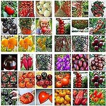 seedsown Red Pepper Samen 30Pcs / Tasche