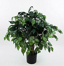 Seidenblumen Roß Ficus Benjamini 60cm grün DA