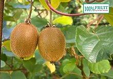 selbstfruchtende Kiwi Pflanze, (Actinidia