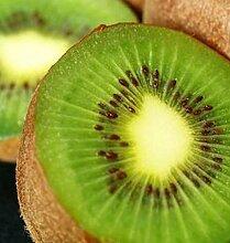 Selbstfruchtende Kiwi Solo 60-80cm - Actinidia arguta