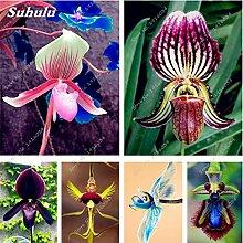 Seltene Orchideen-Blumen-Samen Indoor Bonsai