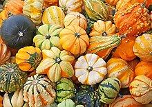 Seltene Samen Kürbis Dekorative Mix Organisch gewachsen