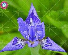 Seltene Vielfalt! 50 PC / bag Chinesische Iris Samen Staude Pflanze vergossen Haus & Garten Hof 95% Keimungrate Bonsai Blume 2