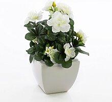 Set 2 x Azaleen TABITA, weiße Blüten, grüne Blätter, in Keramiktöpfen, 20cm - Kunstblumen / Dekoration Kunstpflanzen - artplants