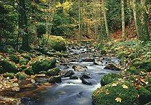 Set: Wälder, Waldfluss 8-teilig Fototapete Poster-Tapete (368x254 cm) Inklusive 1x 1art1® Collection Poster