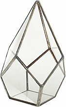 Sharplace Mini Glas Terrarium Pflanzgefäß -