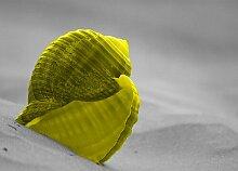 Shell, Fotodruck East Urban Home Größe: 35,7 cm