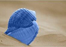 Shell, Fotodruck East Urban Home Größe: 64,2 cm