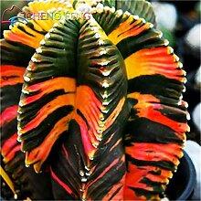 Shopmeeko 100 stücke Exotische Kaktus pflanzen