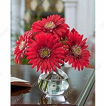 Shopmeeko 100 Stücke Gazania Rigens Blumen