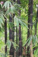 Shopmeeko 20 STÃœCKE Bambus pflanze Frische