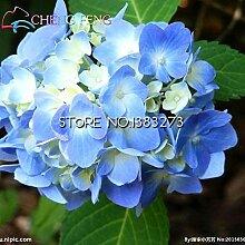 Shopmeeko 20 Stücke Sonnenblumen pflanzen
