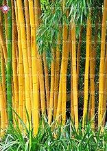 Shopmeeko 40 STÃœCKE Gelb Bambus pflanze Frische