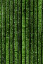 Shopmeeko 40 Teile/Beutel Bambus Arten Seltene