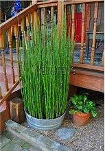 Shopmeeko Beförderung!20 mini moso Bambus