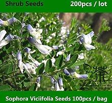Shopmeeko ^^ Familie Fabaceae Sophora Viciifolia