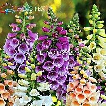 Shopmeeko Fingerhut Blume Pflanzen Easy Growth