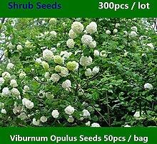 Shopmeeko ^^ Gemeinsame Krampfrinde Viburnum